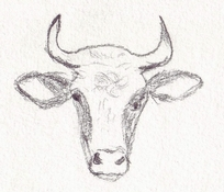Cow studies January / February / March / April 2005